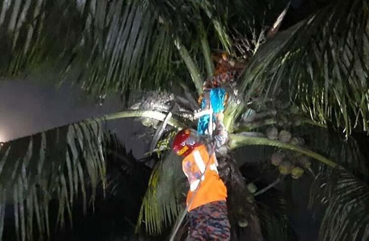 রাতে নারিকেল গাছের মাথায় গৃহবধূ, উদ্ধার করলো ফায়ার সার্ভিস